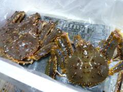 活がに(蟹)の写真