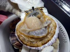 ホタテの解体の仕方:貝開け完了